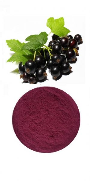 Organic elderberry Powder